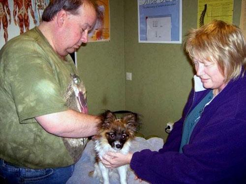 behandling hund